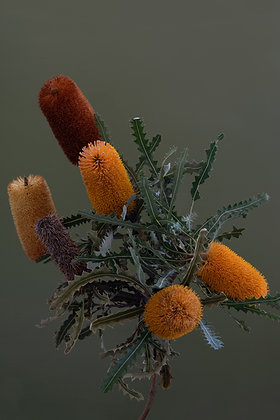 Bunch of Banksias