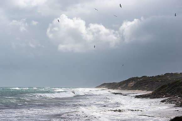 Fine Art print titled Soar. Stormy, rocky shoreline in Burns Beach, dramatic stormy skies and sea gulls soaring on the wind