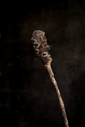 Banksia On a Stick