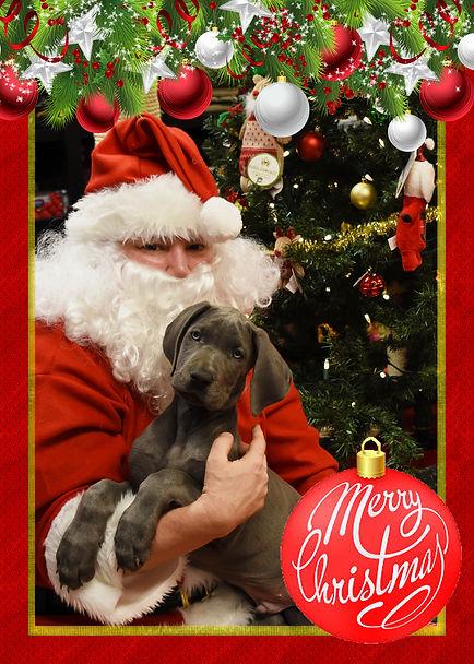 moose_and_santa.jpg