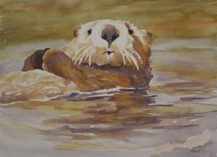 Otter at Moss Landing