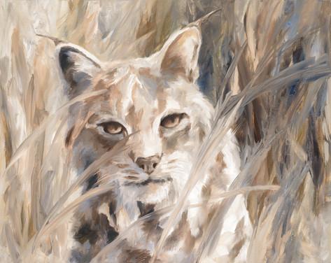Bobcat Watching