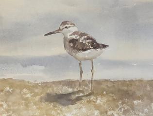Seabird looking back