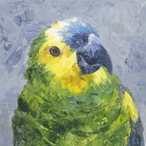 Susana's bird