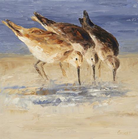 shorebirds 2