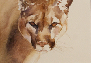 Mountain Lion Watching