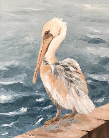 mr pelican.jpg