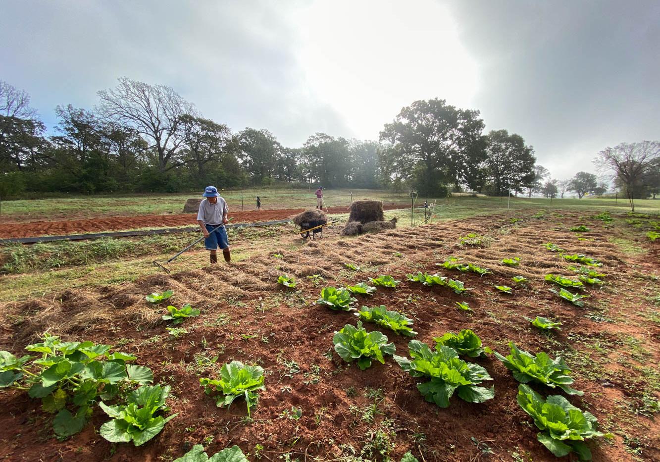 JGC-Farm-201021-IMG_2159.jpg
