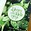Thumbnail: [완전한 치유 . 완전한 건강] - Rev. Sungho Bae, M.D.
