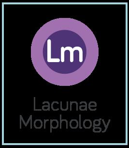 Lacunae Morphology.