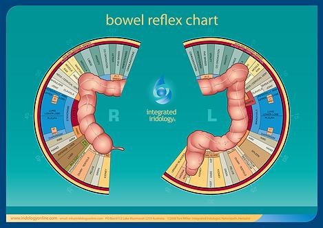 Integrated Iridology® Bowel Reflex chart
