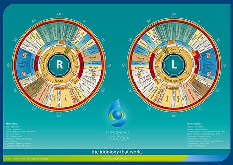 Integrated Iridology Desk Chart