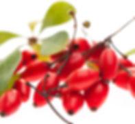 berries_sml.jpg
