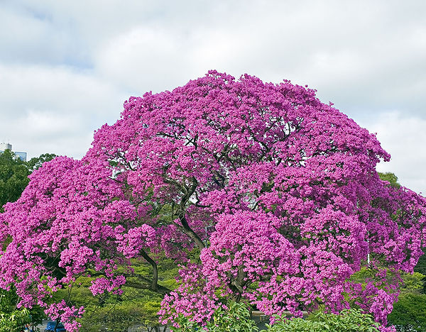 tree_mobl.jpg