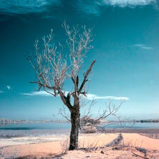 Lone Tree III