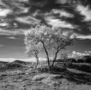 Trees at Meteora