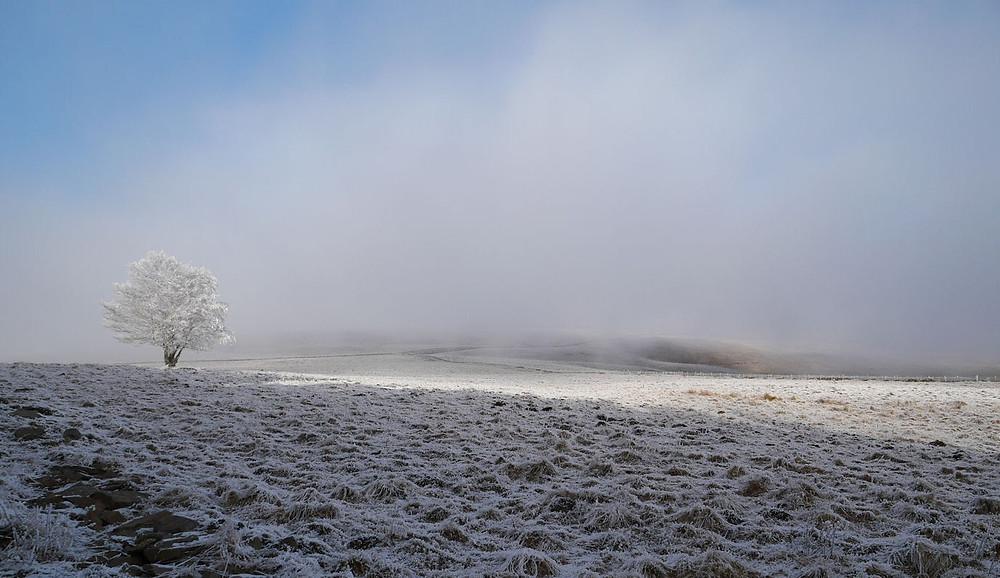 Paysage d'hiver en Aubrac