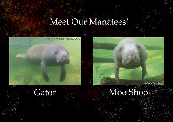 Meet Our Manatees.jpg