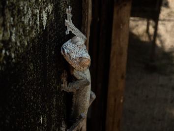 gecko_44246027900_o.jpg