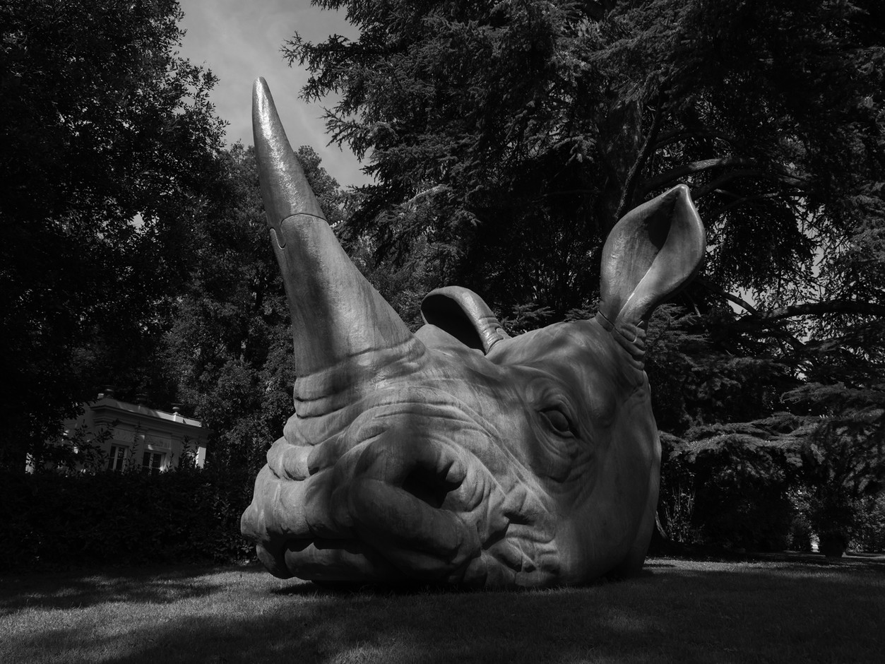 rhino-sculpture-florence.jpeg