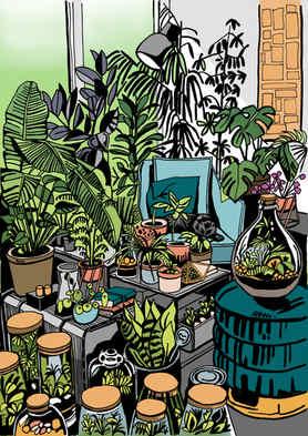 Terrariums and Houseplants