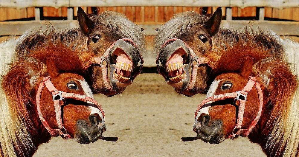 La prof fait sa tête de poney inquiet après ses cours d'Emailing