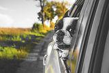 dog kennel heywood waggy walks