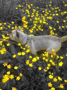 PicsArt_06-02-03.35.28.jpg
