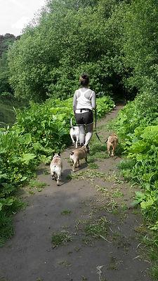dog walker heywood waggy walks