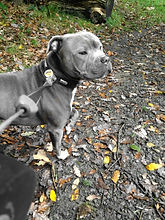 dog walker bury waggy walks