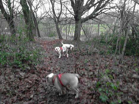 waggy walks dog walker rochdale