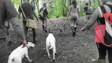 dog walker bamford waggy walks