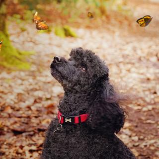 5 butterflies small.jpg