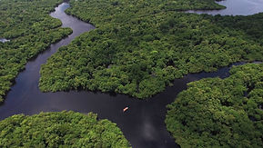 floresta-amazonica-343759751.jpg