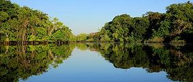 Floresta-Amazônica-1840.jpg