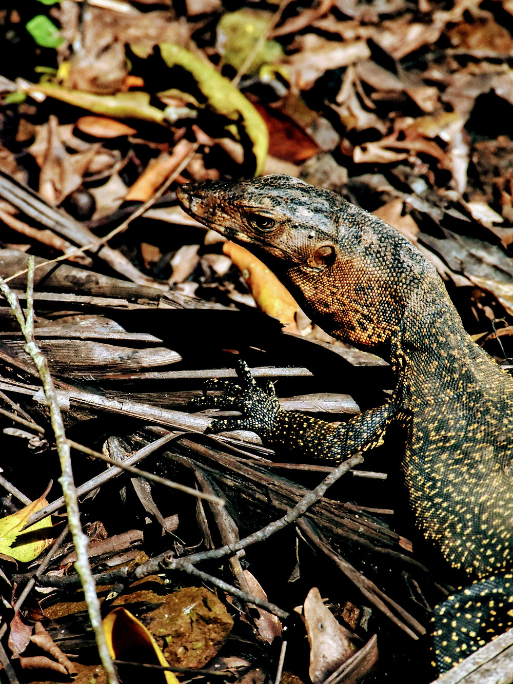 lizard in the twigs