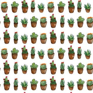 fcactus .jpg