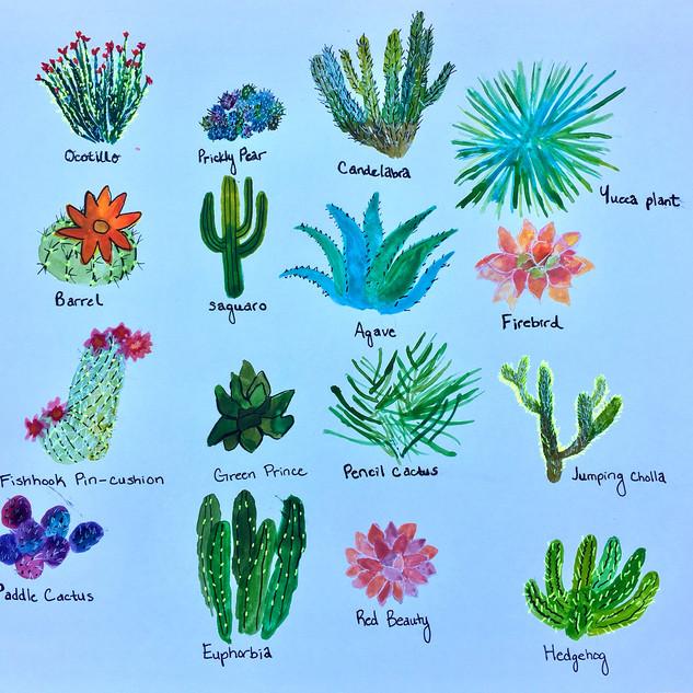 cactus wonderlad.jpg