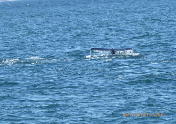 tour-day2-baleine.JPG