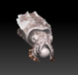 ZBrush_Polypaint_Cuttlefish.jpg