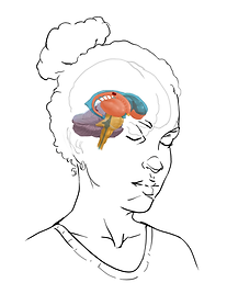 Sylvia.Anterior.Stage3.png