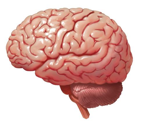 Lateral Brain