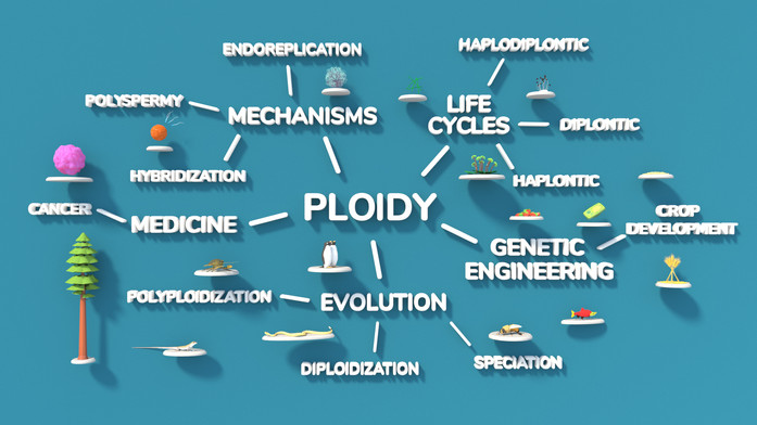 Masters' Research Project: Point of Ploidy