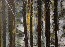 Birch trees by Tina Scahill