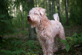 dog-3619156.jpg
