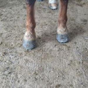 horsefoot2.jpg