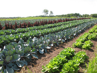 Why Choose Organic