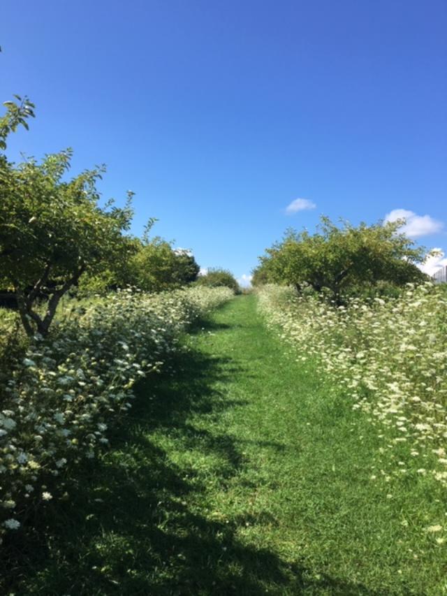 OrchardPath.JPG