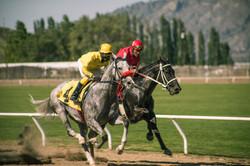 horse race_5
