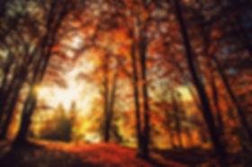 gozd 1.jpg